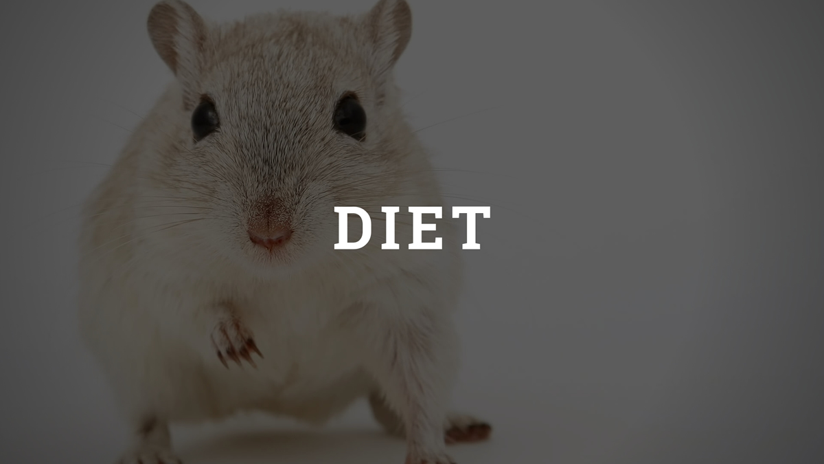 Hamster Diet Category