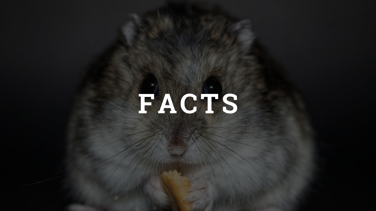 Hamster Facts Category