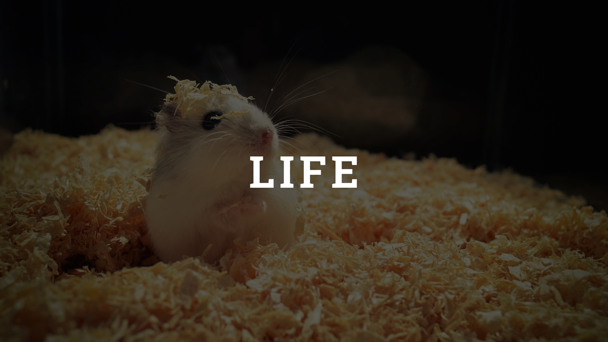 Hamster Life Category