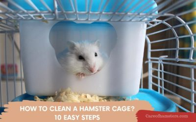 How To Clean A Hamster Cage and How Often: 10 Easy Steps