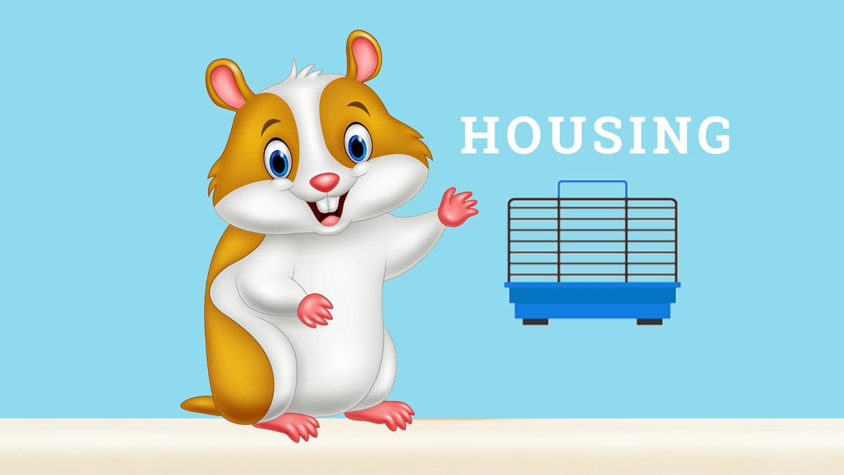 Hamster Housing